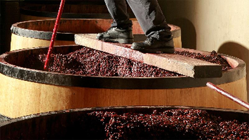 Winemaking & Aging Image